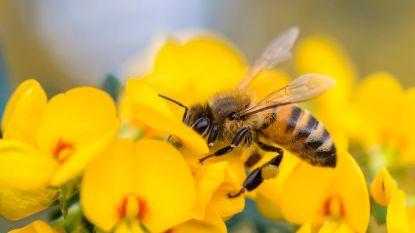 Milieudienst zet met wedstrijd in op meer natuur in eigen tuin