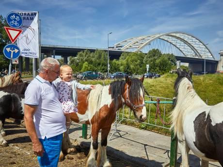 Te heet: geen paarden op Paardenmarkt Oud-IJsselmonde