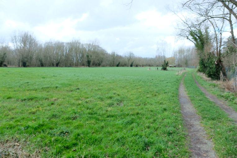 In deze wandelweg in de Bormstraat in Ramsdonk aten de honden vermoedelijk vergif.