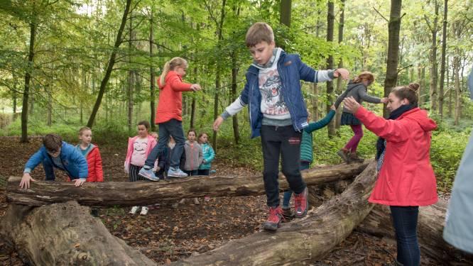 8 tips voor een herfstwandeling in de Vlaamse Ardennen: van ravotten in het Kluisbos tot kuieren tussen loslopende runderen of gewoon genieten van de pracht van het Brakelbos