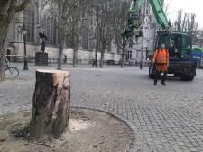 Lot van bomen op Bossche Parade is onzeker: afgelopen drie jaar zijn er 19 gerooid