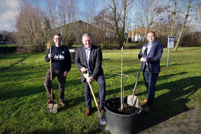 Het stadsbestuur van Oudenburg plant een nieuwe vredesboom langs de Stationsstraat