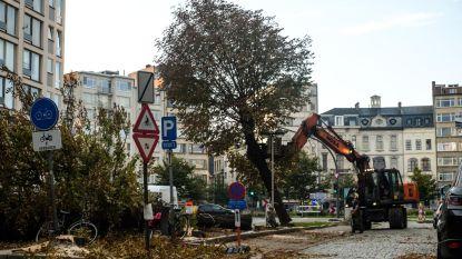 """Waarom een gekapte boom in Antwerpen altijd tot ruzie leidt: """"Mijn advies voor elke politicus: wil je extra aandacht? Plant een boom!"""""""