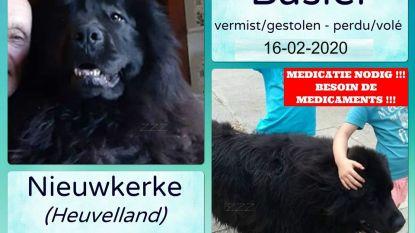 """Eigenaars zoeken gestolen hond: """"Basiel heeft dringend medicatie nodig"""""""