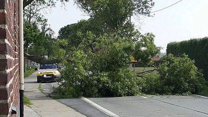 Tachtigtal oproepen voor stormschade in Westhoek