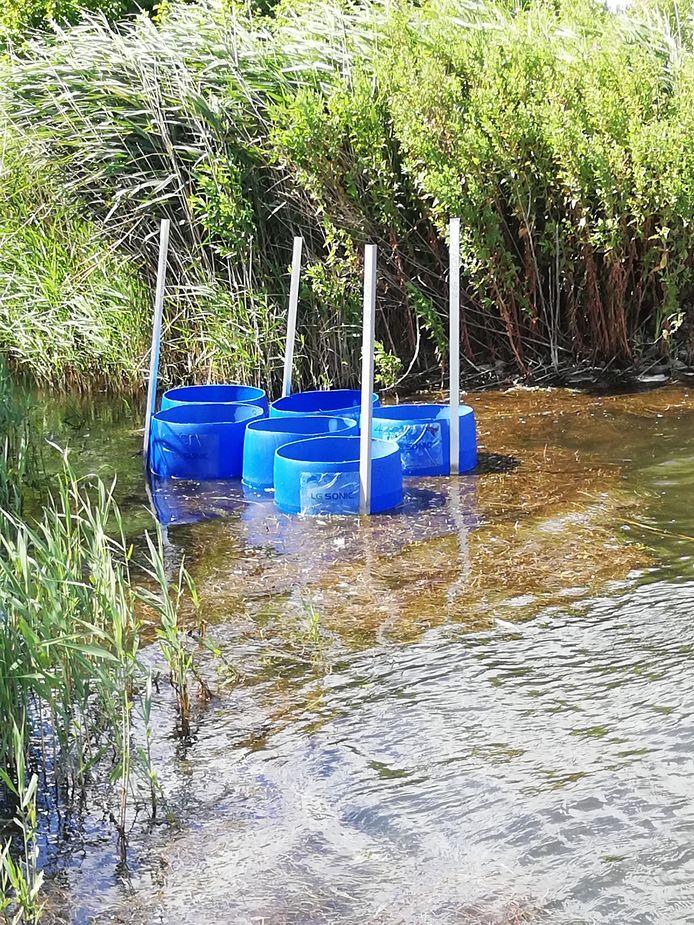 Het Zoetermeerse bedrijf LG Sonic test een nieuwe technologie om fosfaat uit het water te halen.