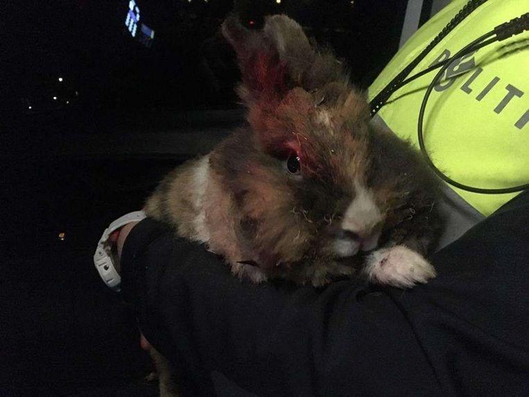 Dit konijn werd vorige week in brand gestoken in Apeldoorn. Een dierenarts zag zich genoodzaakt het beestje te laten inslapen.