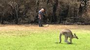"""""""Krijg na 40 jaar nog altijd tranen in mijn ogen"""": Australische dierenarts (70) moet zwaar verbrand kangoeroejong afmaken"""