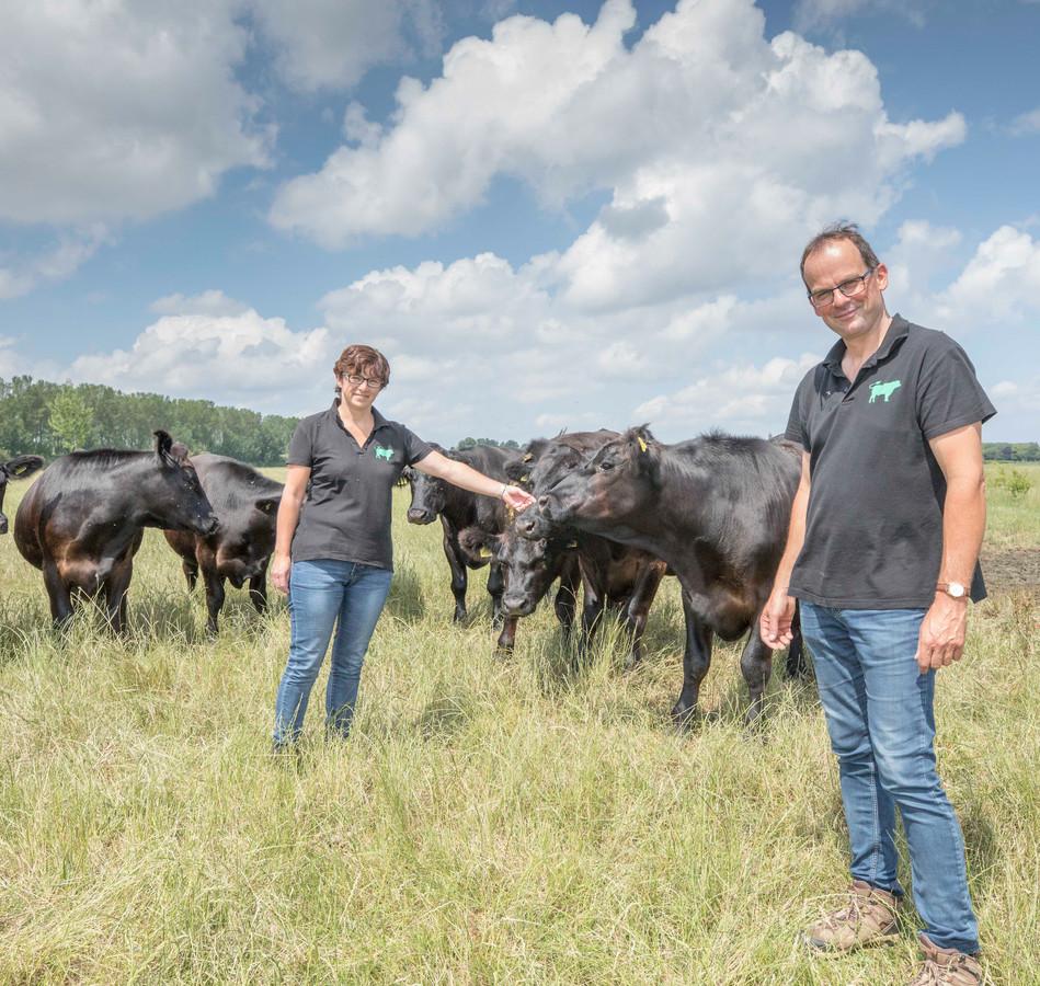 René en Christine de Wilde met hun Schotse runderen.