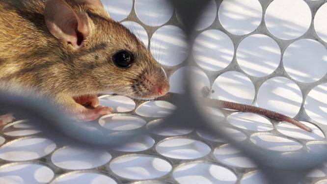 """Wetenschappers: """"Dodelijk Chaparevirus uit Bolivia overgedragen van mens tot mens"""""""