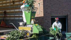 Wietplantage in de Loostraat ontdekt