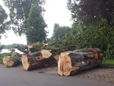 Kastanjes in Dordtse Maasstraat geveld door ziekte