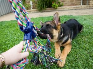 Une Wanzoise violemment attaquée par ses trois chiens
