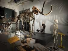Dankzij een mammoet werd Twente op slag eeuwen ouder