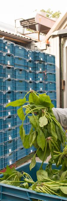900 kilo topkwaliteit spinazie uit Ens afgekeurd: 'Dit gaat toch nergens over?'