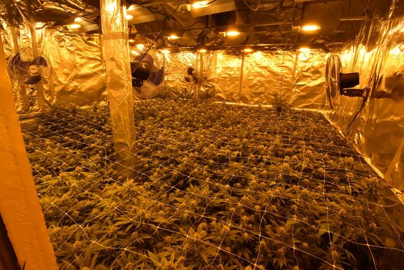 Kenny L. gaf toe dat hij in Deinze een cannabisplantage runde in een woning die hij huurde. Archieffoto ter illustratie.