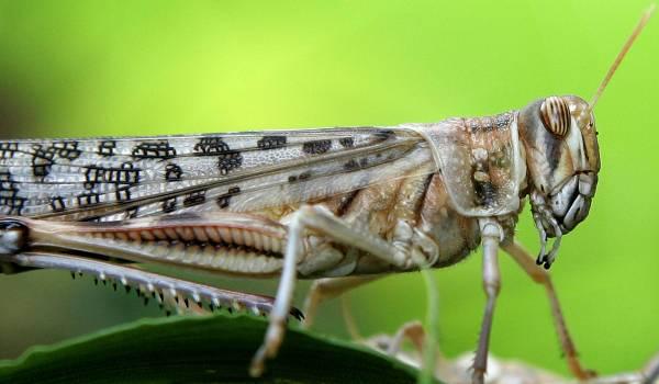 'Insecten zijn aan het verdwijnen'