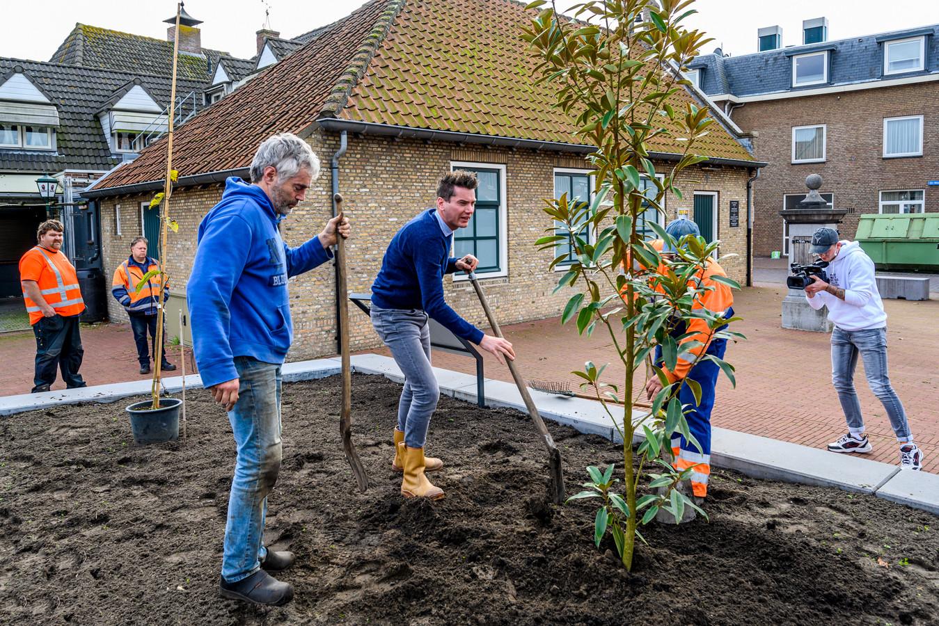 Eerste magnolia wordt geplant als officiële stap in metamorfose van Ossendrecht. Van links naar rechts: Peter Blommerde, wethouder Jeffrey van Agtmaal en Ko de Crom.
