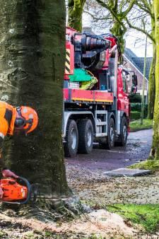 Oisterwijk kapt erop los, van suikeresdoorn tot boomhazelaar