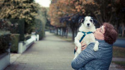 """Vzw matcht 'eenzame' dieren met 55-plussers: """"Win-win voor mens en dier"""""""