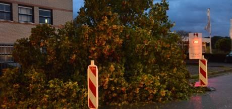 Stormschade in Breda, grote boom begeeft het in de herfstwind