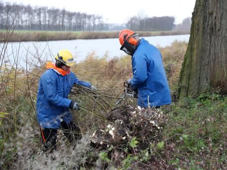 'Na kappen sneller nieuwe bomen planten in al eerder getroffen Bernissegebied'