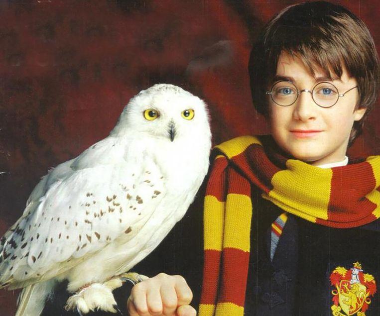 Hedwig, de sneeuwuil van Harry Potter. Beeld