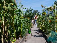 Groene Loper Enschede: samen met buren straat vergroenen