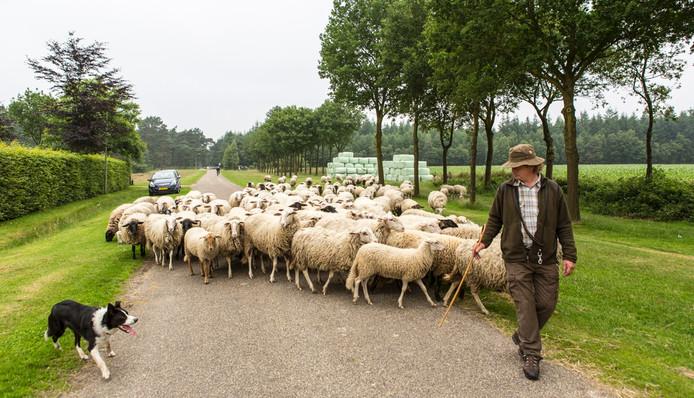 Herder Gartman met de schaapskudde.