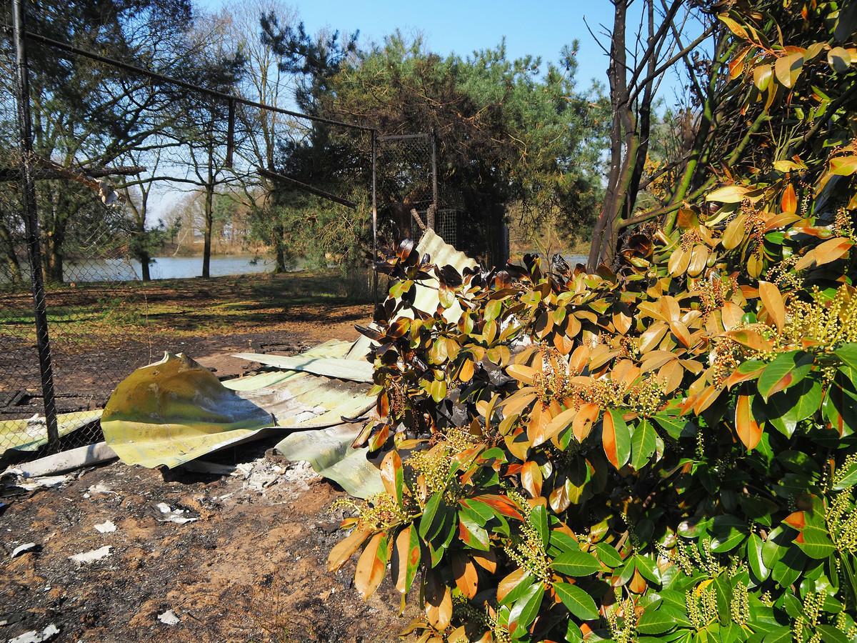 Tien dieren komen om bij een aangestoken brand in de Beekse Bergen.