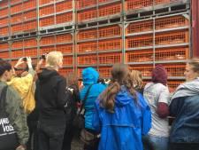 Activisten bewijzen slachtkippen 'laatste eer' in Nunspeet