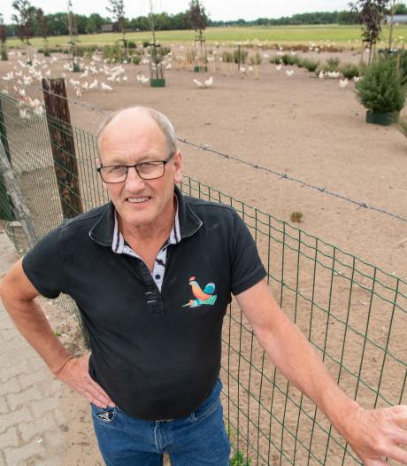 Opluchting bij boeren in Oost-Nederland na uitroepen ophokplicht: 'Elke keer als ik ganzen over zie vliegen, krijg ik het benauwd'