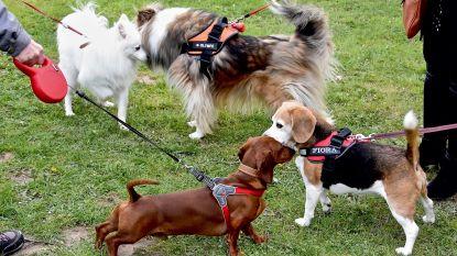 Hondenspeelweide maakt meteen 50 viervoeters blij