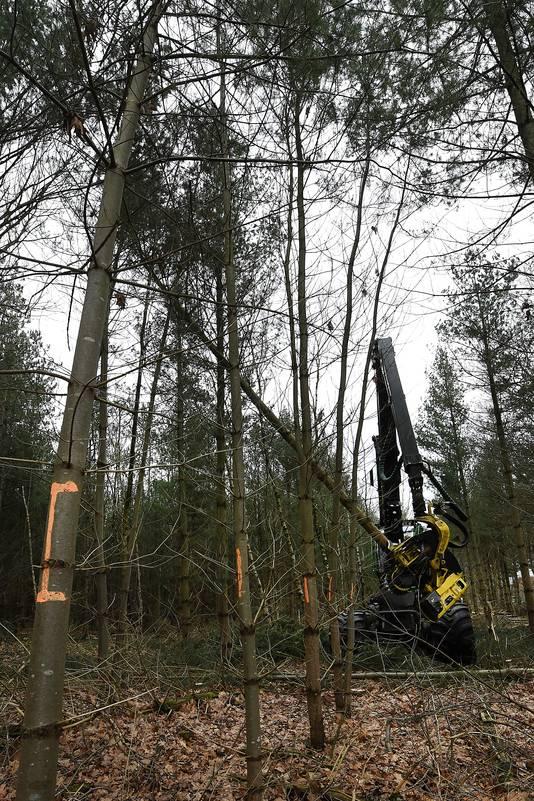 Het westelijke gedeelte, bij Landhorst en Peelven, is tot halverwege maart afgesloten. Ze rijden hier met vrachtwagens en houtverwerkers. Wat voor gevaarlijke situaties kan zorgen.