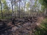 Instabiele bomen gerooid na Peelbrand