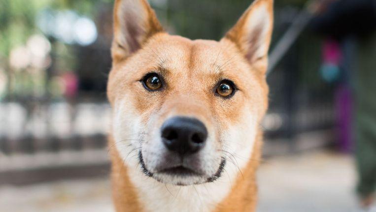 Iets Nieuws Schattig: deze straatfotograaf neemt alleen foto's van honden @LH72