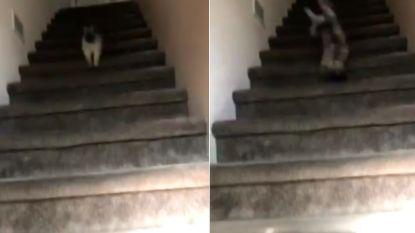 Dit hondje is wel héél blij om zijn baasje weer te zien