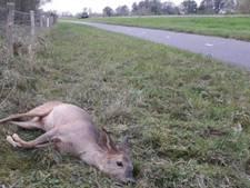 Reegeit afgemaakt na beten loslopende hond in Biesbosch