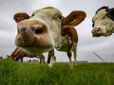 Twentse boeren boeren 't best: regio voedt miljoenen monden