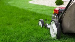 Zo kies je de beste grasmaaier voor jouw gazon