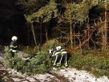 Na sneeuw ook harde windstoten in Hilvarenbeek: boom omgewaaid