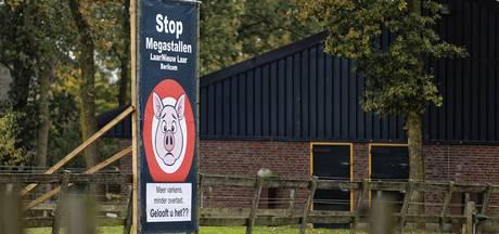 Aantal varkens in Het Laar in Berlicum zal toch niet stijgen