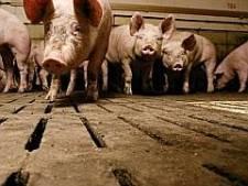 Boekelse boeren krijgen nog even geen vergunning voor luchtwassers