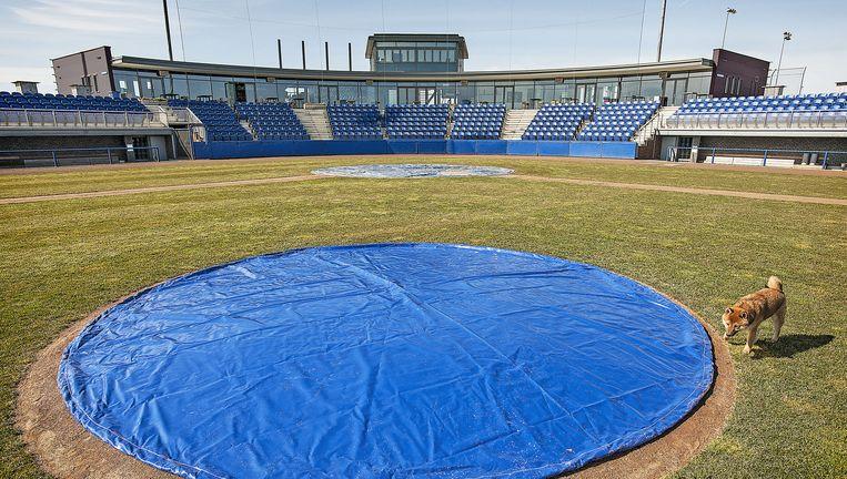 Het honkbalcomplex in Hoofddorp. De capaciteit van 600 zitplaatsen kan worden uitgebreid tot 25 duizend. Beeld Guus Dubbelman / de Volkskrant