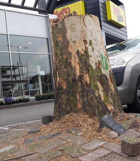 Kapvergunning opnieuw onder de loep na rooien bomen bij Bergse Nettorama