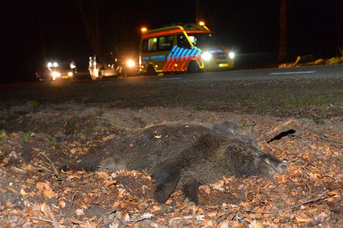 Op  de Hoog Buurloseweg bij Radio Kootwijk botste een motorrijder op een overstekend wild zwijn. Het dier overleefde de aanrijding niet.