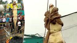 Deze joekel van een krokodil zat maanden vast op een bouwwerf