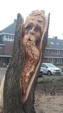 Sander Boom uit Vaassen is begonnen met woodcarven in 2007. Op het NK Woodcarving in 2008 valt hij in en in 2009 wordt hij Nederlands Kampioen Sculptuurzagen