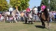 'Paard' centraal tijdens 23ste Levend Erfgoed Expo