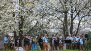 Oberbayernmuziek tussen de bloesems: Oppenheimers houden voor de achtste keer bloesemterras en wandeling